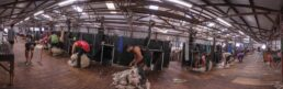 20 Stand Cooinbil Shearing Board - James Braszell Photography