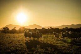 Shearing Photography