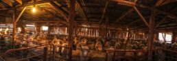 A Full Cooinbil Woolshed - James Braszell Photography