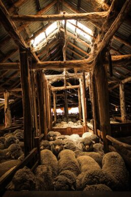 Pens Inside Tottington Woolshed - James Braszell Photography