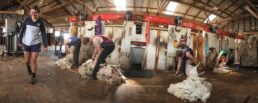 Shearing at Warrawidgee - James Braszell Photography